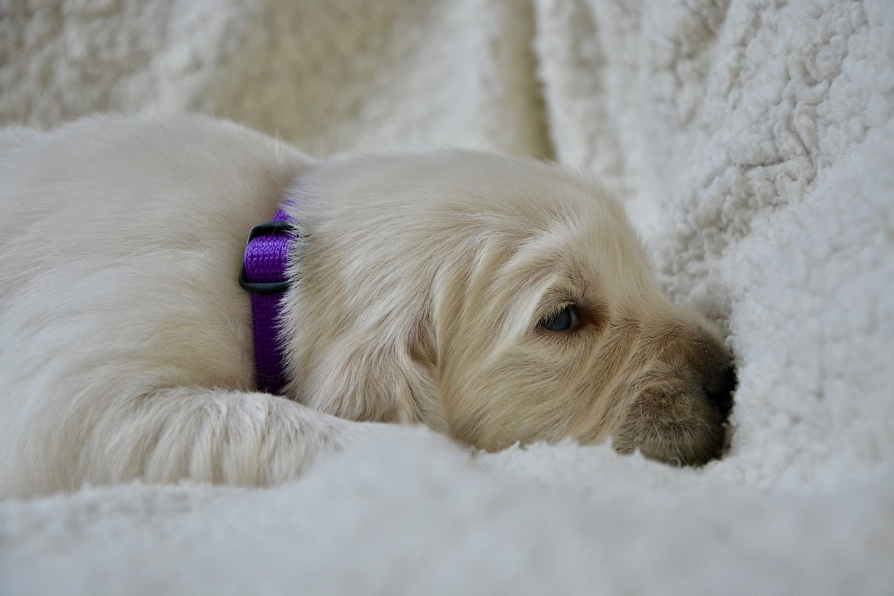 Three Ways to Keep Your Pup Off the New Furniture